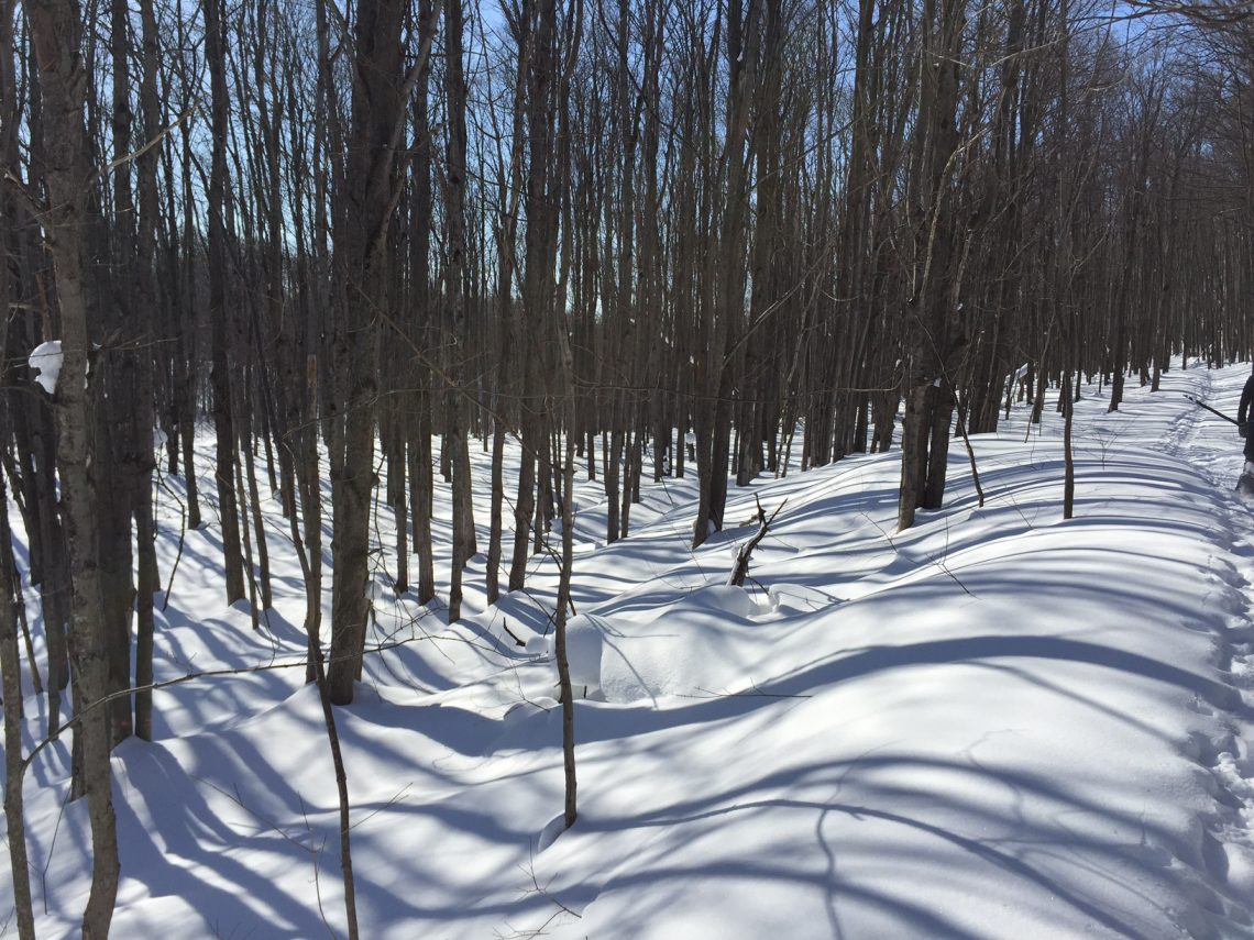 Collingwood snowshoe trail 01