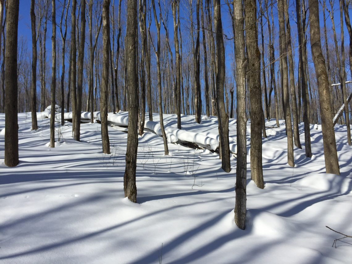 Collingwood snowshoe trail 02