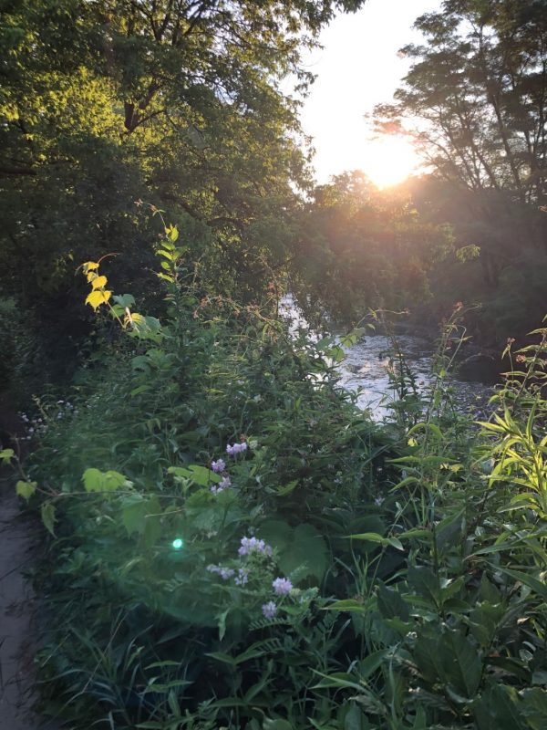 Along the Don River Trail