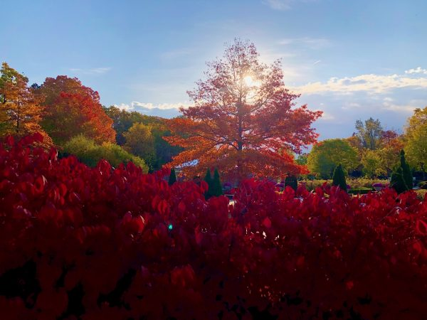 Autumn reds at Mount Pleasant Cemetery